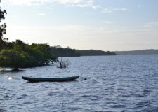 The Brazilian Amazon- The Perfect Spot